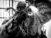 carnevale-di-schignano (54)