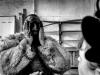 carnevale-di-schignano (57)