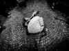 carnevale-di-schignano (88)